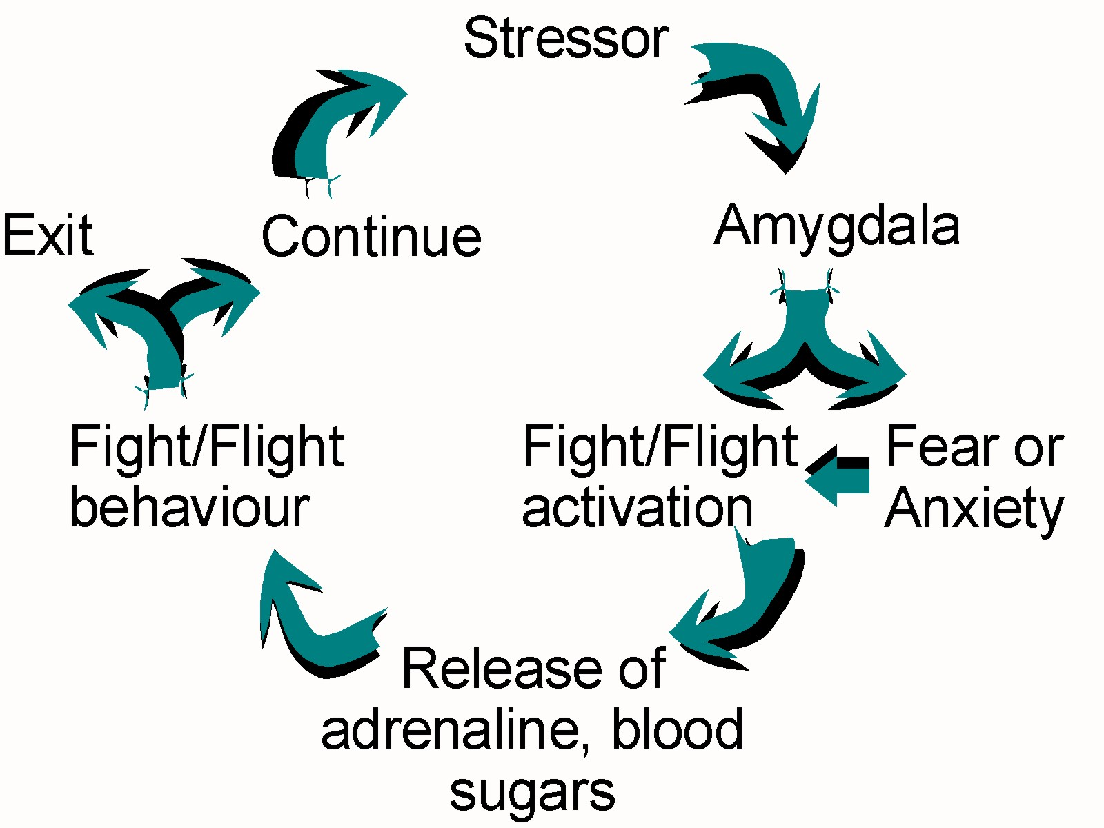 Taming the Amygdala